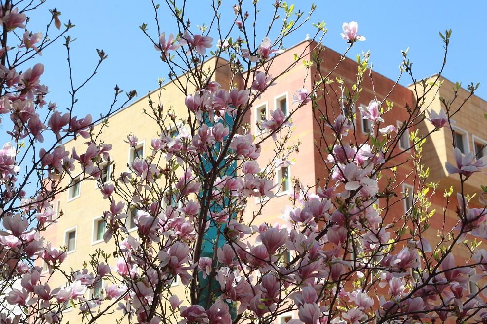 Yeditepe Üniversitesinde Yaşam